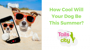 6 Tips For Keeping Your Dog Cool In The Heat