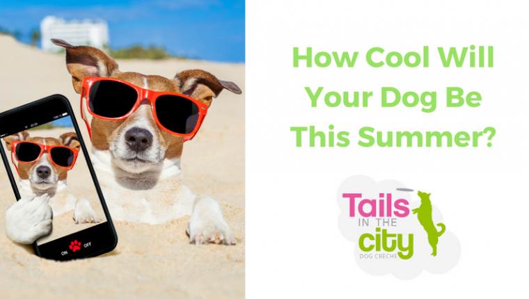 Image for 6 Tips For Keeping Your Dog Cool In The Heat