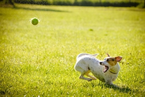 Playtime vs training: How to set boundaries with your dog & his toys