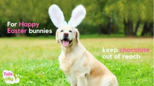 For a Safe and Waggy Easter Keep Chocolate Out of Reach