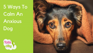 5 Ways To Calm An Anxious Dog
