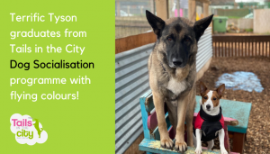 Terrific Tyson – A Dog Socialisation Success Story